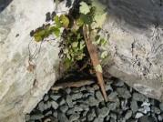Weinpflanze 2005